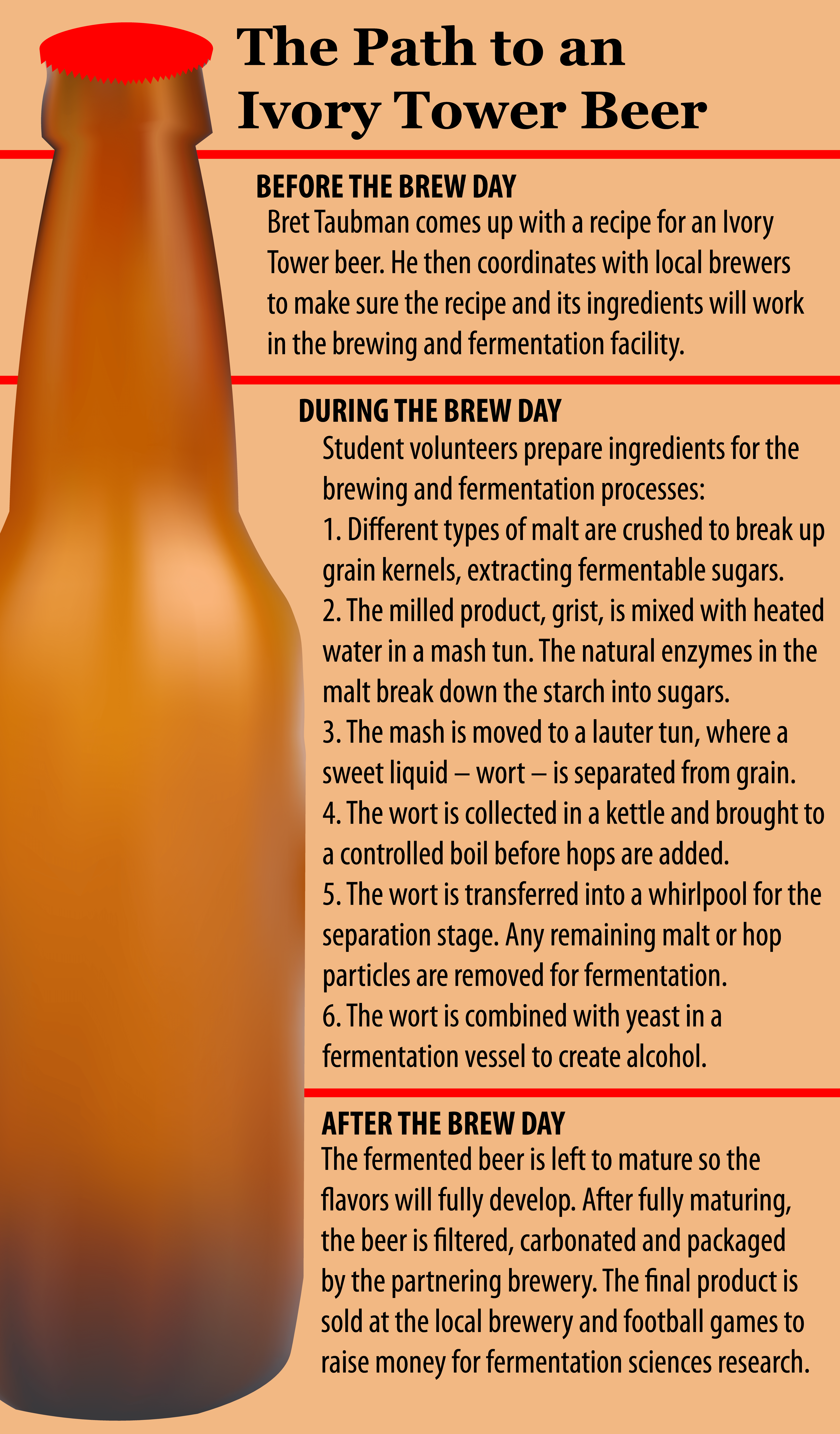 Graphic describing the beer brewing process